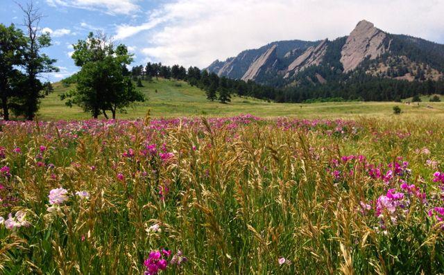 Fairy Meadow in Summer