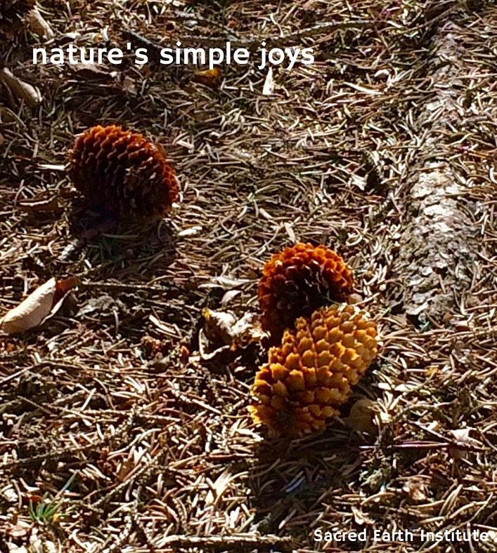 nature's simple joys