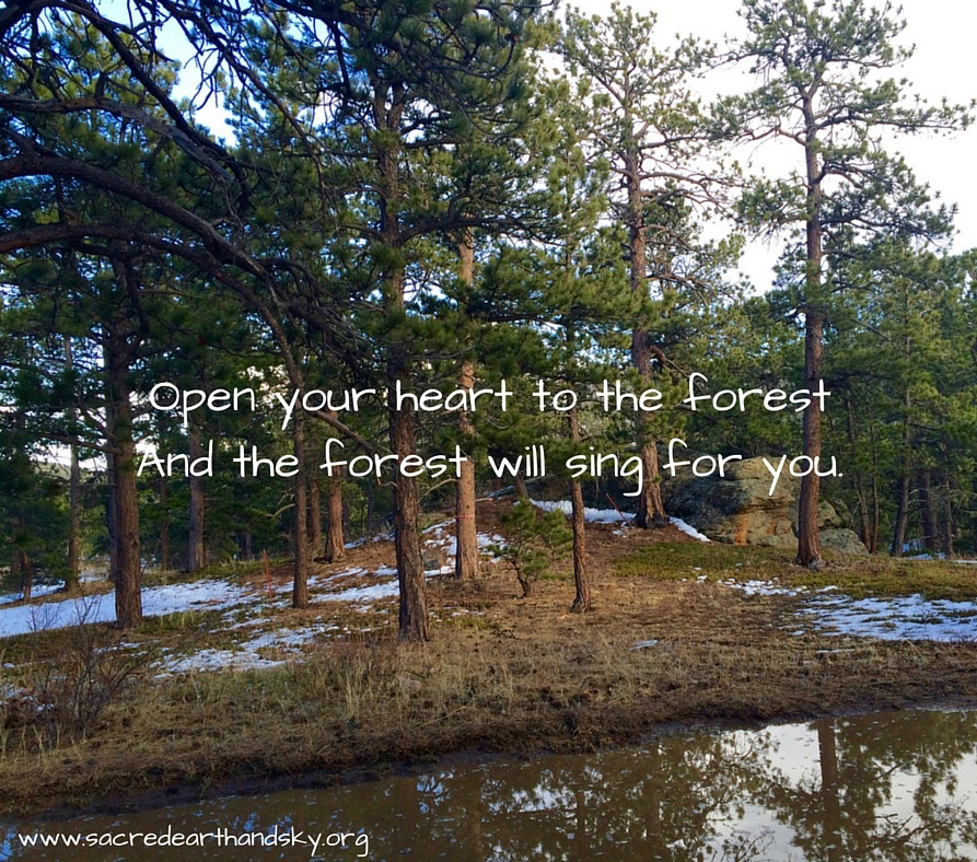 Open your Heart to the Forest