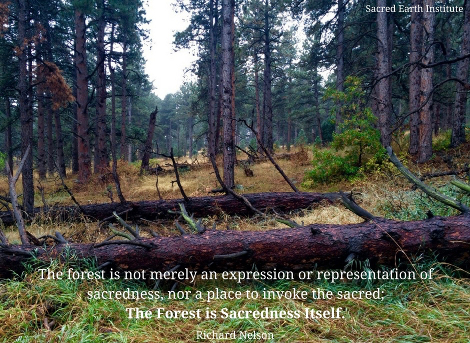 Forest is Sacredness Itself