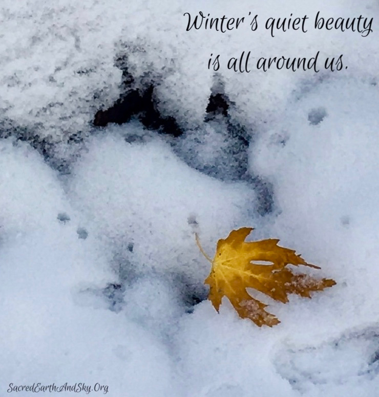 Winter's Quiet Beauty
