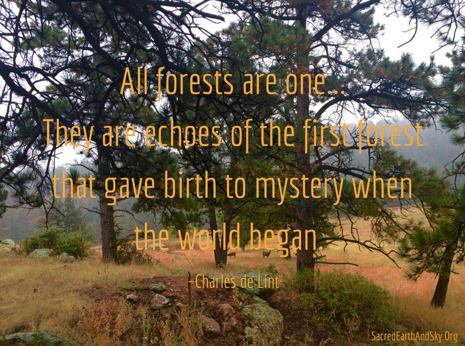 All Forests are One